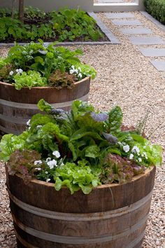 Half Wine Barrel Salad Planters - if you're strapped for space, don't have much time or room for a garden, consider repurposing a large container to grow a variety of salad or stir fry ingredients. Learn how to plant up a box or container garden @ http://themicrogardener.com/fast-food-diy-instant-veggie-garden-part-1/ | The Micro Gardener