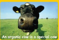"""ORGANIC 