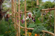 Gardening-Tips-221.jpg 733×487 pixels