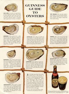 1952 Guinness Beer Guide to Oysters Vintage Poster (created by Ogilvy & Mather) Huur de Oesterkoning in voor uw oesterparty www. Types Of Oysters, What Is Content Marketing, Native Advertising, Advertising History, Advertising Poster, Oyster Recipes, Swipe File, Oyster Bar, Fish And Seafood