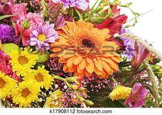 fragmento, de, ramo, de, flores, aislado, blanco, fondo. Ver Imagen agrandada