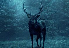 the deer from hannibal | It walks quietly through the meadow toward Will, who holds his breath ...