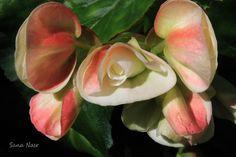 photos de fleur Plants, Photos, Flowers, Pictures, Photographs, Flora, Plant, Cake Smash Pictures