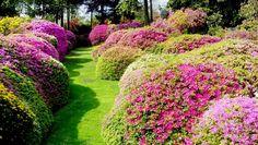5 must see botanical gardens to visit in Italy - Giardino Botanico Villa Carlotta, Lombardy
