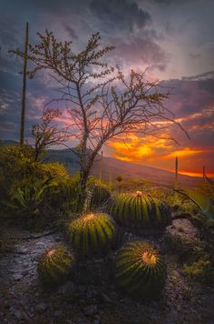 Biznagas Sunset by Luis Lyons on 500px