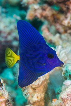 Saltwater Fish Tanks, Saltwater Aquarium, Aquarium Fish, Underwater Creatures, Ocean Creatures, Underwater World, Colorful Fish, Tropical Fish, Great Big Sea