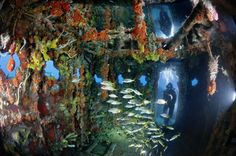 Artificial Coral Reef / Underwater Ecosystem 10 years