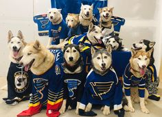 Me and my bitches all up on the bandwagon. Hockey Teams, Ice Hockey, Sports Teams, Meet The Team, A Team, St Louis Baseball, Stl Cardinals, Florida Panthers, Young Guns