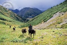 Get into Jasper National Park's backcountry with a guided horse tour.