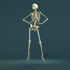 Skeleton posing