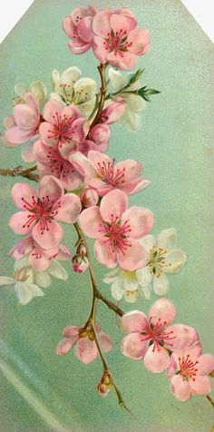 """Garden of the Heart"" ~ pink and white blossoms."