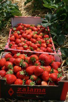 Meer dan 1000 afbeeldingen over fruit op pinterest fruitbomen wijnstokken en pergola 39 s - Wijnstokken pergola ...
