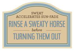 Learning Center | Absorbine.com  For Nutmeg, my dear sun bleached horse.