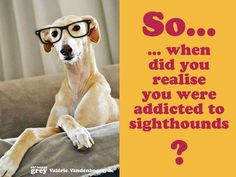 Hi, my name is Culene and I am addicted to Sighthounds....