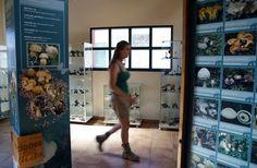 El centro micológico de Navaleno estrena la primera colección de setas liofilizadas de la comarca #Pinares  #CastillayLeon #Spain