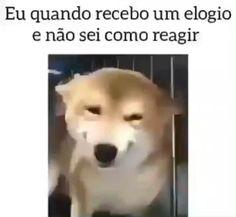 Funny Videos, Smiley Emoji, Image Memes, Otaku Meme, Cute Animal Videos, Cool Pets, Cute Funny Animals, Stupid Funny Memes, My Animal