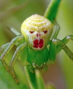 [나우뉴스] 사람 얼굴 같은 모양의 '희귀 거미' 포착