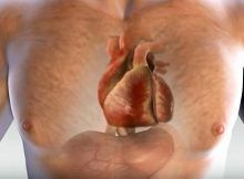 A MONTH BEFORE A HEART ATTACK, YOUR BODY GIVES YOU A WARNING – THESE ARE THE 6 SIGNS!