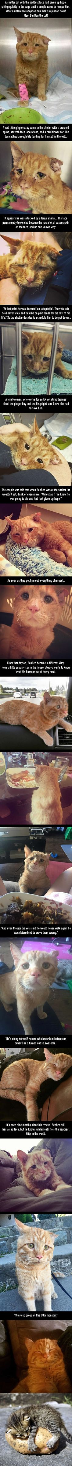 Couple Takes a Chance on Sad Shelter Cat Ben Ben Who Couldn't Find Home, an Hour After Adoption..