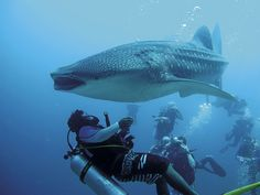 Scuba Diving Liveaboards Maldives