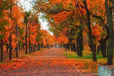 Credit: Vasyl Dudenko   shutterstock This scenic route showcases the pumpkin-orange hues of fall foliage.