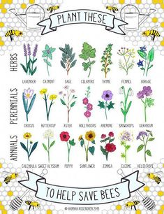This plant guide illustrates 7 herbs, 7 perennials and 7 annuals known to attract bees. Plant and care for these in an ecological way (without the use of harmful chemicals), to help. Spread the word and save the bees! Organic Gardening, Gardening Tips, Gardening Books, Gardening Supplies, Indoor Gardening, Gardening Services, Gardening Courses, Flower Gardening, Flowers Garden