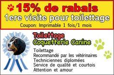 15% de Rabais 1ere visite pour toilettage - L'Ile Perrot