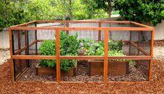 Google Image Result for http://s3.media.squarespace.com/production/1117046/13189567/wp-content/uploads/2011/10/deer-proof-garden-1.jpg