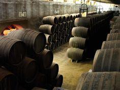 """#Bodegas#La#Aurora Bodegas La Aurora, situada en el corazón de la D. O. P. #Montilla-Moriles, fue fundada en 1964 en Montilla por un reducido grupo de viticultores cautivados por sus vinos y con grandes deseos de superación, fruto de lo cual,  fue galardonada con el título de """"#Cooperativa Ejemplar""""  recibido por el Rey Don Juan Carlos I de España en el año 1973. #Productores de #vino y #aceite de #oliva virgen."""