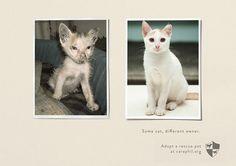 33 Powerful Animal Advertisements
