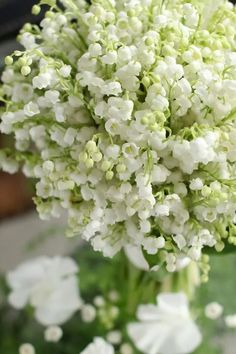 Bouquets of Lily of the Valley - Each year for my birthday, my sister-in-law would give me a small bouquet from her yard. The smell permeated my entire house and it was one of my most favorite presents.