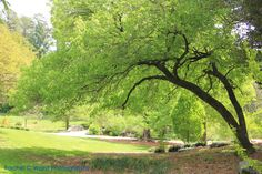 Landscape at Duke Gardens   Rachel C Ward Photography rachelcwardphotography@gmail.com