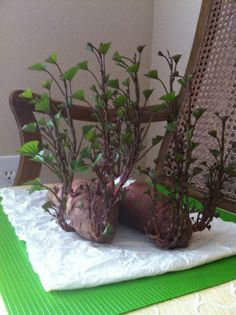 Sweet potato sprouts: how to grow your own sweet potatoes from a sprouted sweet … Veg Garden, Garden Seeds, Vegetable Gardening, Fruit Trees, Trees To Plant, Small Greenhouse, Greenhouse Ideas, Growing Sweet Potatoes, Potato Vines
