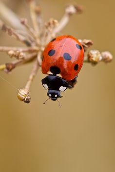James King - Sputnik and the Ladybird