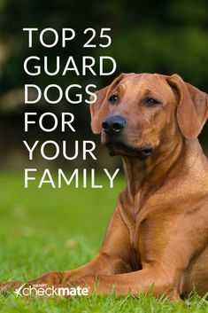 Need a dog to protect you, your home and your family? Check out this comprehensive list of guard dog breeds that can potentially save your life. breeds 25 Best Guard Dog Breeds For Your Family Best Family Dog Breeds, Best Guard Dog Breeds, Best Guard Dogs, Best Big Dog Breeds, Smartest Dog Breeds, Best Dogs For Kids, Best Dogs For Families, Best Family Dogs Large, Family Family