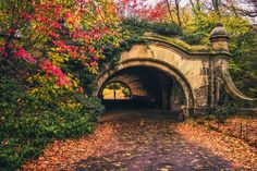 Brooklyn. Autumn in Prospect Park. New York City Autumn. Fall foliage in…