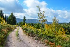 Forststraße am Biogradsko Jezero in #Montenegro (c) FRASHO / franks-travelbox