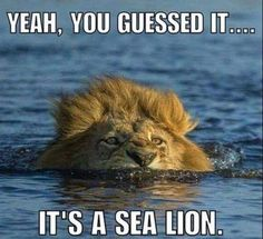 Funny Animal Pictures Of The Day 20 Pics - Funny Animal Quotes - - Funny Animal Pictures Of The Day 20 Pics The post Funny Animal Pictures Of The Day 20 Pics appeared first on Gag Dad. Funny Animal Jokes, Cute Funny Animals, Funny Animal Pictures, Animal Memes, Funny Cute, Animal Pics, Funny Lion, Shark Pictures, Animal Captions