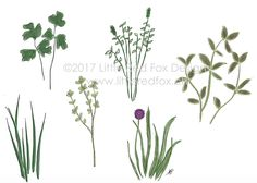 """herbs - great for thank you notes or """"thinking of you"""" Fox Design, Red Fox, Thank You Notes, Little Red, Thinking Of You, How To Draw Hands, Greeting Cards, Herbs, Plants"""