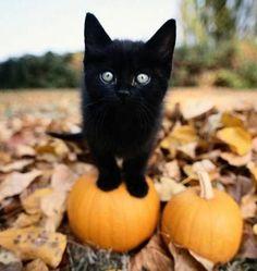A tiny black kitten standing on a small pumpkin.