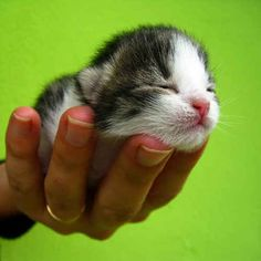 This teeny tiny adorable fluff. | 31 Things To Warm Your Heart On This Cold Day