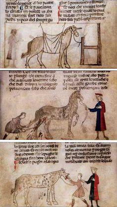 Stallmeister und Wurmsegen - kleine Geschichte der Tiermedizin im Mittelalter