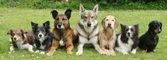 Learn how thousands of people have successfully transformed their dogs from being a nightmare into the loving companions and family members that they wished for. http://fatdestroyer.fatlosswithease.com/homedogtraining