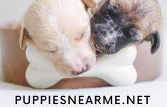 #puppydogsofinstagram #puppydogstagram #puppydogeyesfordays #miniaturesausagedogpuppy #snipsandsnailsandpuppydogtails #puppypalsdogservices #frenchiebulldogpuppy #puppydogpose #puppydoggie #puppydogtee #puppydogeyes🐶 #lovemypuppydog #puppydogpalscake #ilovemypuppydog #weinerdogpuppy #boxerdogpuppy #cockerspanieldogpuppy #servicedogintrainingpuppy #littlepuppydog #oldeenglishbulldoggepuppy #puppydogvideos #czechoslovakianwolfdogpuppy #puppydogfilter #puppydoglife #tiredpuppydog #puppydogo Puppies Near Me, Boxer Puppies, New Things To Learn, Cool Things To Buy, Sausage Dog Puppy, Olde English Bulldogge, Free Facebook Likes, Puppy Dog Eyes, Cool Gadgets To Buy