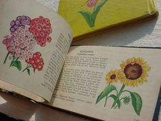 2 Vintage Pocket Guide Books by Whitman Woodland Flowers & Garden Flowers 1945 ~ seller; florasgarden on ebay