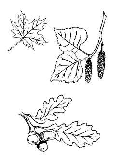 Différentes feuilles qui tombent, à colorier