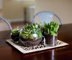 #DIY fishbowl or glass container #terrariums
