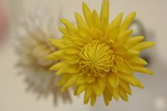 How to make a Chrysanthemum...