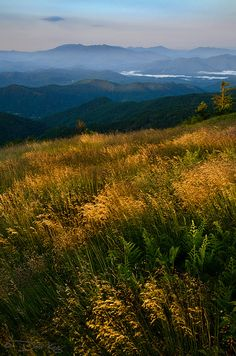 Amber Waves    Round Bald, Roan Highlands, NC/TN    Layers of Mountain Oat Grass are highlighted by the rising sun with the Black Mountain range in the background. By Sugar Mtn Photography