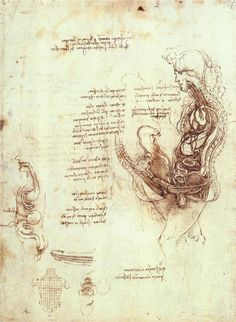 Comparison of scalp skin and onion - Leonardo da Vinci - WikiPaintings.org